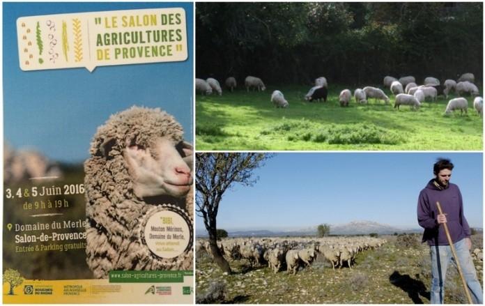 salon_agriculture_provence_distrigaz.jpg